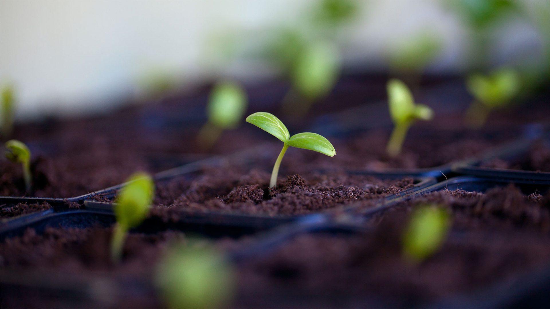 Fachverband Pflanzenkohle e.V.